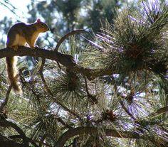 Iconic Road Trips: Enjoying Idaho's Ponderosa Pine Scenic Byway