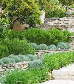 A Mediterranean planting scheme with santolina, iris and rosemary in groups on dry stone walls. Photo courtesy Clive Nichols