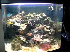 Grandpas fish tank