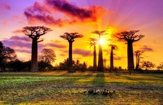 Sunset in Madagascar - dennisvdw/Getty Images
