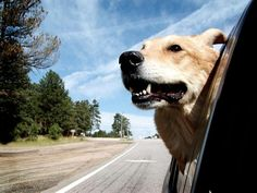Pet taxi services coordinate the transportation of pets to grooming or vet…