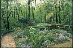 Sustainable Gardening: 5 Green Gardening Tips