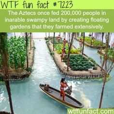 Facts about history, awesome history facts WTF Facts : funny, interesting & weird facts The More You Know, Good To Know, Did You Know, Wtf Fun Facts, Funny Facts, Strange Facts, Random Facts, Weird History Facts, Floating Garden