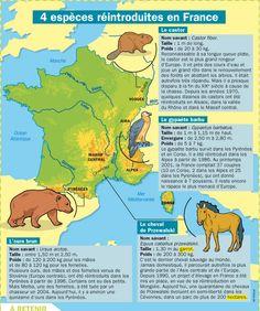 Fiche exposés : Quatre espèces réintroduites en France Le Castor, Learn French, French Language, Continents, Learning, Information, Books, Projects, Drawing Techniques