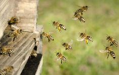 Prečítajte si, na našom blogu, prečo sú pre nás včely také dôležité Illustration, Texture, Buchholz, Blog, Crafts, Animals, News, Pictures, Beehive