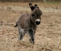 A baby donkey on the grass - Baby ezel - Baby Donkey, Mini Donkey, Baby Cows, Baby Elephants, Cute Funny Animals, Cute Baby Animals, Animals And Pets, Wild Animals, Farm Animals