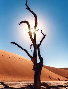 Petrified Acacia, Dead Vlei, Namibia Photo by Callie Giovanna — National Geographic Your Shot