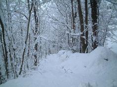 Neve nei boschi dell'Appennino in Garfagnana