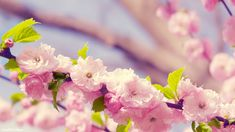 Spring Flowers Background | Spring Flower Wallpapers - HD Wallpapers
