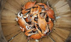 Steamed crabs from Maryland's Chesapeake Bay. Boston Travel Tips