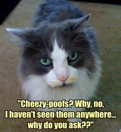 I Could Help You Look for Them in Exchange for a Treat  Cat memes - kitty cat humor funny joke gato chat captions feline laugh photo