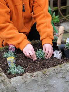 How to grow alpines and rockery plants in a sink. Handily we just dug up a sink. Cottage Garden Patio, Garden Sink, Rockery Garden, Gravel Garden, Alpine Garden, Alpine Plants, Belfast Sink Planter, Rock Plants, Drought Resistant Plants