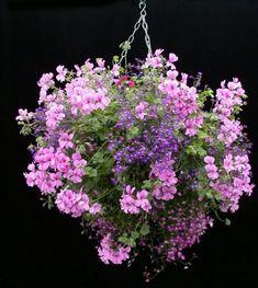hanging basket with geranium and lobellia
