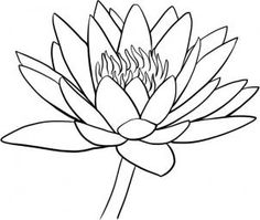 How to Draw a Water Lily, Step by Step, Flowers, Pop Culture, FREE Online Drawing Tutorial, Added by Dawn, February 28, 2011, 6:30:12 pm