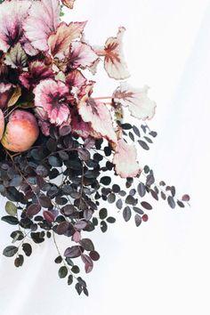 Begonia Rex, loropetalum, and chrysanthemum container planting recipe - Autumnal merlot from www.pithandvigor.com