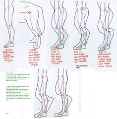 *EVEN IN FANTASY ART OR COSTUMES PROPORTIONS AND ANATOMY NEED TO MAKE SENSE. Digitigrade leg foaming proportions study by 10kk on DeviantArt