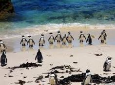 Come and walk with penguines! http://www.testmylife.com/profile/offer_detail.php?id=183