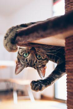 playground | animals + pet photography #cats