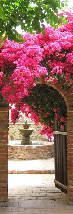 """The bougainvillea - also known as the """"paper flower plant""""- is a flowering perennial plant that grows up to 30 feet tall. Description from pinterest.com. I searched for this on bing.com/images"""