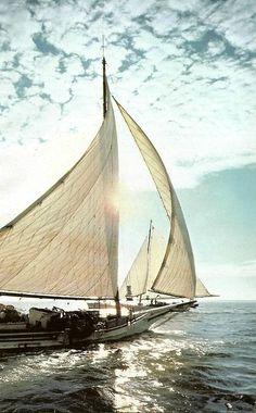 sailing the ocean / sea life in the ☀ Strand Meer . Yacht Design, Sail Away, Set Sail, Am Meer, Tall Ships, Belle Photo, Sailing Ships, Sailing Boat, Sailboat Yacht