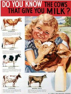 Do you know which dairy cows produce milk? Find the one that makes chocolate milk :)