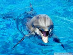 #smile #dolphin #animals #photography