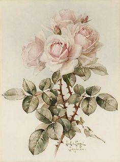 Vintage Pink Rose Graphic Image Art Fabric Block Doodaba 5 x 7 Decoupage Vintage, Decoupage Paper, Vintage Postcards, Vintage Images, Ideias Diy, Botanical Art, Vintage Flowers, Vintage Pink, Watercolor Paintings