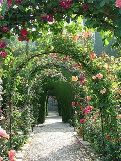 Lovely rose garden at the Alhambra Palace, Granada/Spain