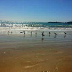 Seagulls at mooloolaba
