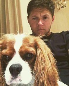 Niall's dog