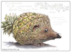 pineapple and hedgehog - hedgeapple? pinehog? pinedgehog? pinedgeapllog???