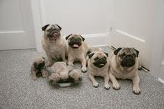 Naming Names - http://www.iluvallpugs.com/naming-names/
