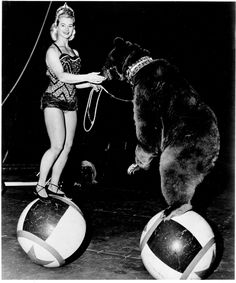 Circus bears...