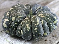 """Thai Rai Kaw Tok Pumpkin:  """"(C. moschata) Green 8-lb fruit have tan spots on the rind. Flesh is yellow-orange, sweet and flavorful with a smooth texture; a great eating variety that performs very well in our Missouri summers, and stands up well to pests and disease. Attractive for decoration and superb for the table; a rock-hard rind makes this a great keeper. A Thai market variety that is sure to become popular here."""""""