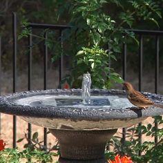 Fountain Head, Bird Bath Fountain, Solar Powered Fountain Pump, Le Hangar, Design Patio, Patio Roof, Flagstone Patio, Concrete Patio, Pergola Patio