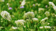 Eine blühende Wiese mit fremden Augen sehen www.licht-trifft-schatten.de #Wiese #Wildblumen #Gewitterstimmung #Perspektiven