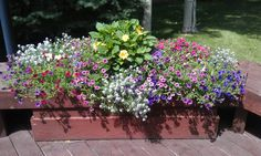 Pool side planter using Calibrochoa, Alyssum, and Dahlias by The Potting Shed Gardeners.