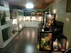 Sweet reptile room