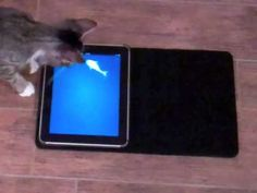 Play games with your cat on your iPad #innovative