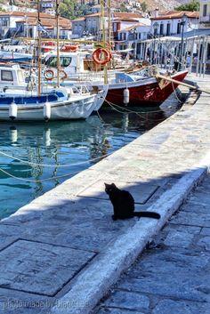 Hello Kitty, Poros Island, Greece