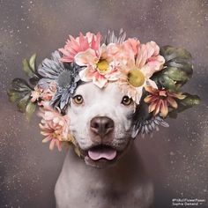 Makeup, Beauty, Hair & Skin | These Pit Bulls Wearing Flower Crowns Will Melt Your Heart | POPSUGAR Beauty Photo 9