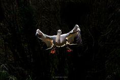 Landing.  by Marina Cano.