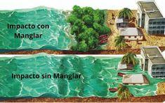 Earth Science, Aquarium, Thinking About You, Goldfish Bowl, Aquarium Fish Tank, Aquarius, Geology, Fish Tank
