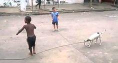 Esta Cadela Não Só Brinca Com As Crianças Como Ainda Ajuda a Saltarem à Corda