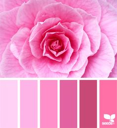 Likes, 21 Comments - Design Seeds® Pink Palette, Colour Pallette, Design Seeds, Pink Color Schemes, Color Combos, Rosa Pink, Color Balance, Everything Pink, World Of Color