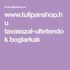 www.tulipanshop.hu tavasszal-ultetendok boglarkak