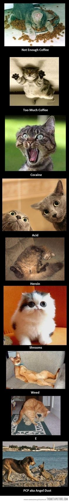 Cats on drugs…