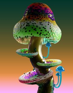 Hongos raros: Jonathan Zawada Through our focus on older houses like the Sala Beckett, the Mushroom Art, Mushroom Fungi, Mushroom Species, Wild Mushrooms, Stuffed Mushrooms, Poisonous Mushrooms, Mushroom Pictures, Pictures Of Mushrooms, Slime Mould