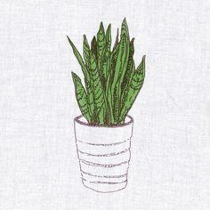 Groundworks Houseplant Guide: The Snake Plant — Sansevieria.I have this guy! Cactus Plants, Garden Plants, Indoor Plants, Snake Plant Care, Paper Collage Art, Plant Illustration, Container Gardening, Urban Gardening, Houseplants