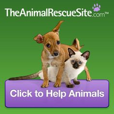 Rescued in a different way - The Animal Rescue Site